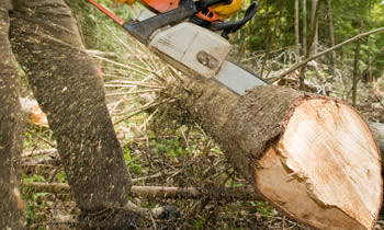 Tree Service in Bellevue NE Tree Service Estimates in Bellevue NE Tree Service Quotes in Bellevue NE Tree Service Professionals in Bellevue NE