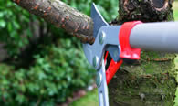 Tree Pruning Services in Bellevue NE